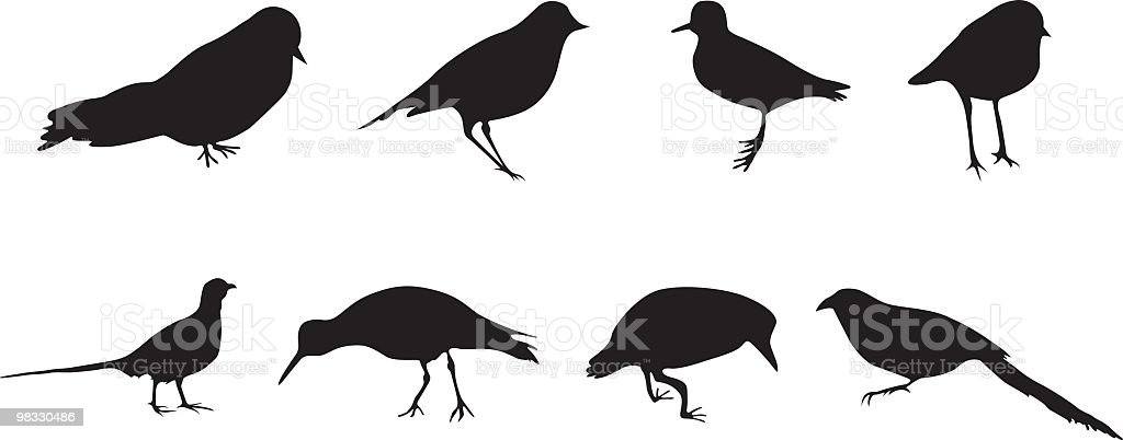 Assorted Birds - Design Elements royalty-free assorted birds design elements stock vector art & more images of animal