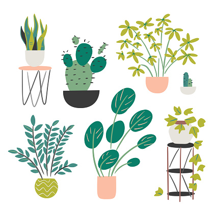 Assorted houseplant collection — hand-drawn vector elements