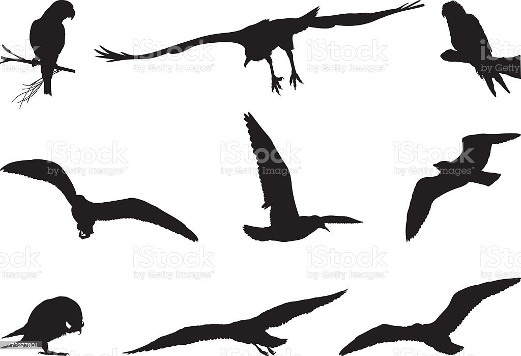 Assorted silhouettes of birds royalty-free assorted silhouettes of birds stock vector art & more images of animal