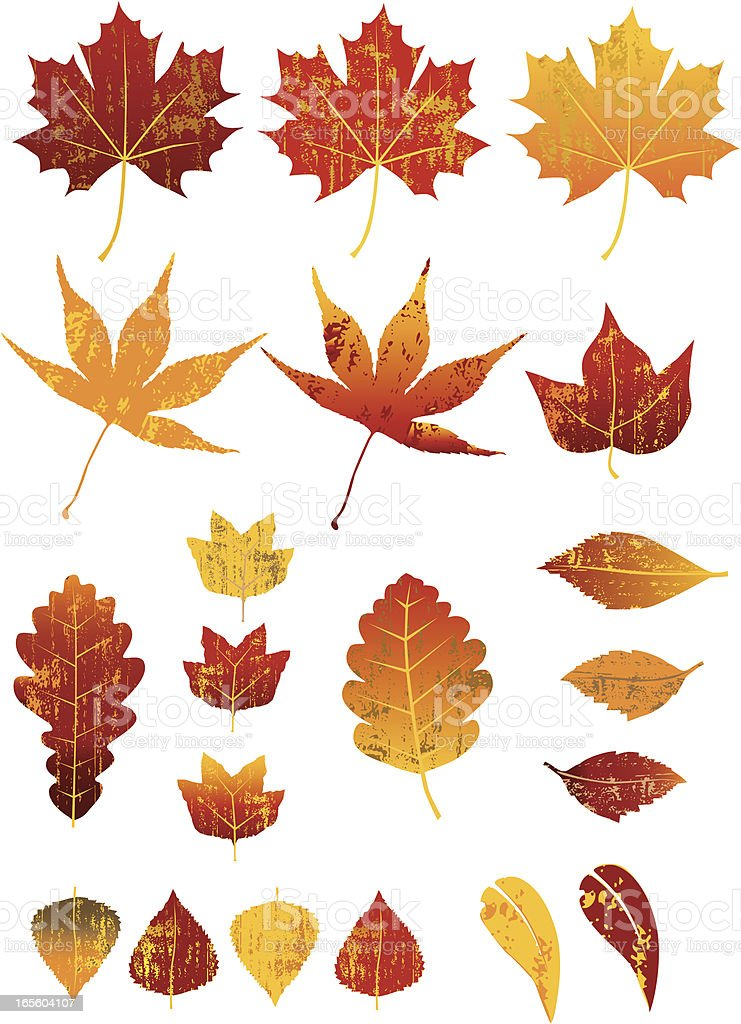 Assorted Textured Autumn Leaves royalty-free stock vector art