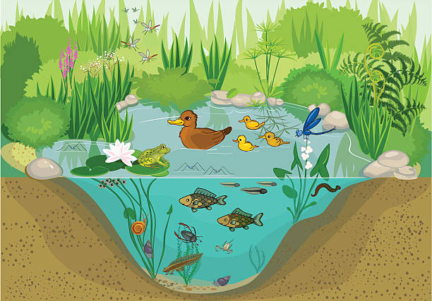 at the pond - pond stock illustrations