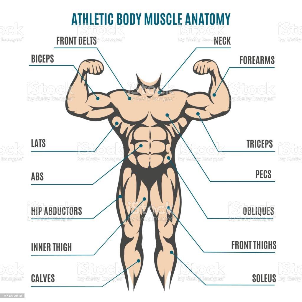 Ilustración de Anatomía Muscular De Figura De Hombre De Cuerpo ...