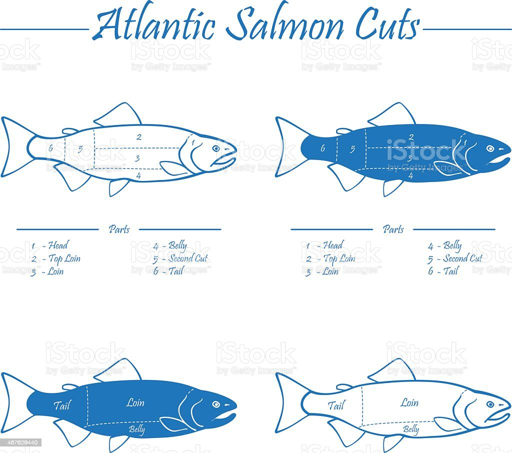 Atlantic salmon cuts diagram vector art illustration