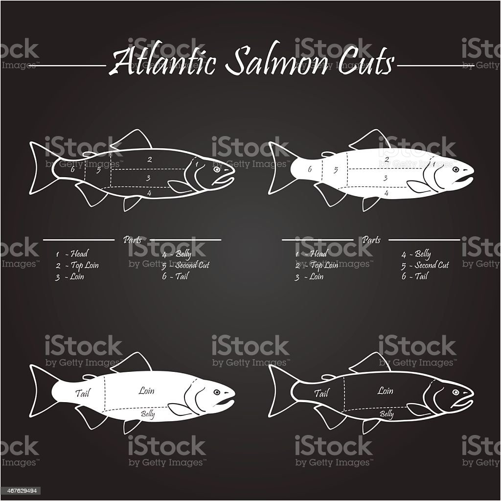atlantic salmon cuts diagram royalty-free atlantic salmon cuts diagram  stock illustration - download image