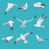 Atlantic seagull in different action poses. Cartoon flying birds seagull posing, wildlife mascot character. Vector illustration