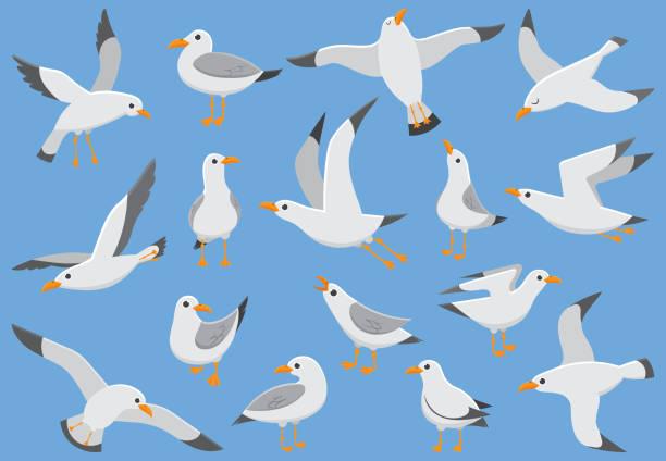 atlantische weiße seevögel fliegen am himmel. seagull beach am kai. seevögel, möwe-cartoon-vektor-illustration - maul stock-grafiken, -clipart, -cartoons und -symbole