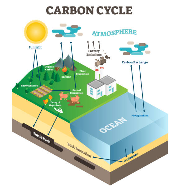 atmosphere carbon exchange cycle in nature, planet earth ecology science vector illustration diagram scene with ocean, animals, plants and industrial factory. - rower stock illustrations