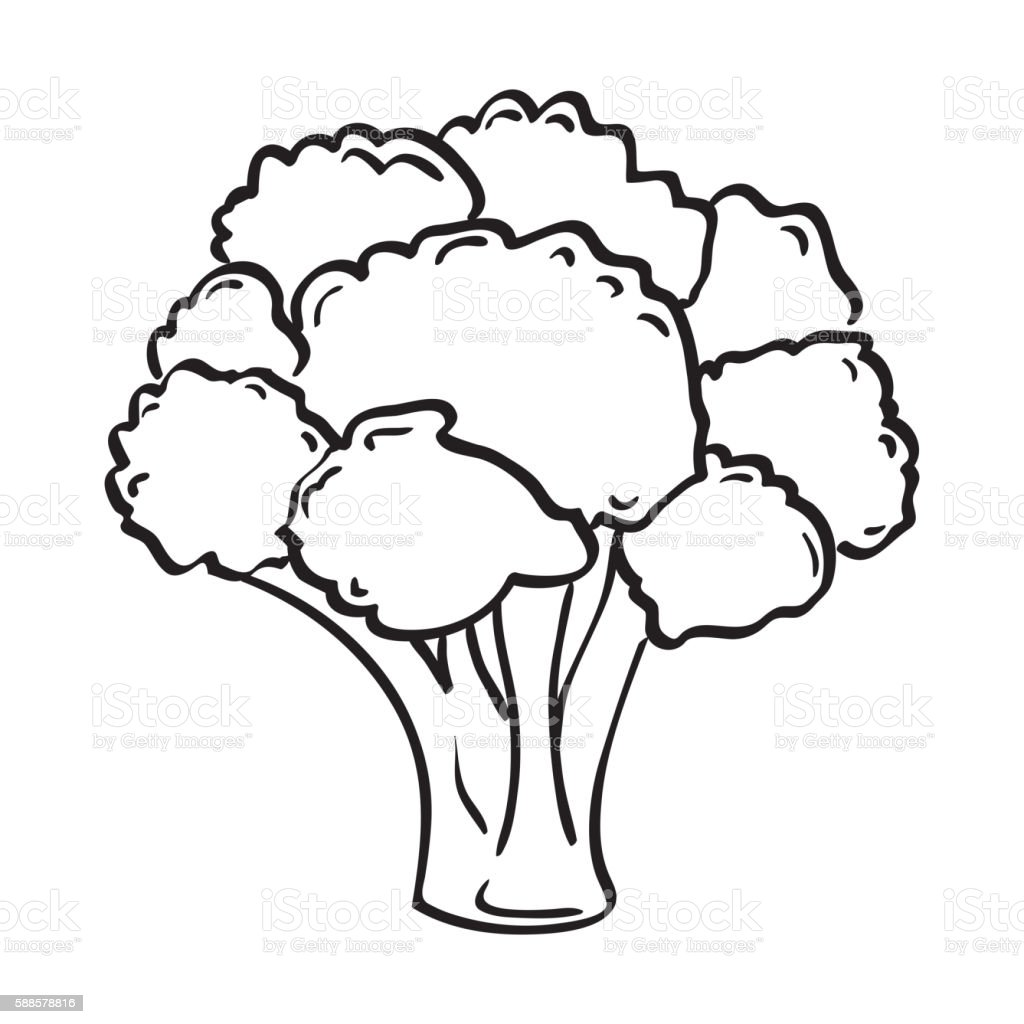 atristic hand drawn vector illustration of broccoli stock illustration download image now istock https www istockphoto com vector atristic hand drawn vector illustration of broccoli gm588578816 101063773