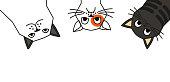 istock Ð¡ats tell you wake up. Cat meme 1288652698