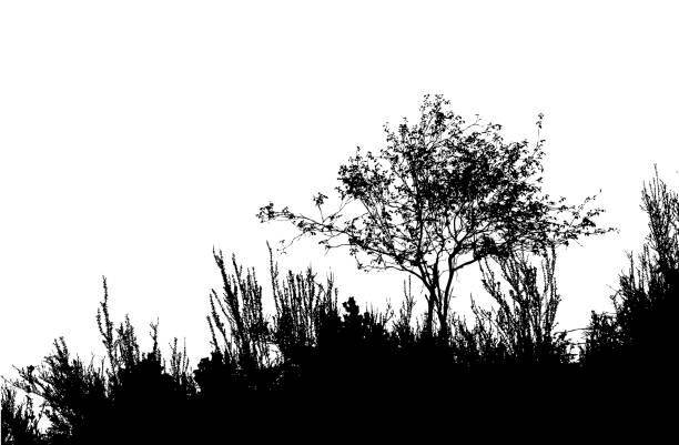 Atutumn Brush vector art illustration
