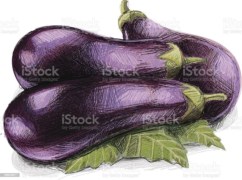 Aubergine royalty-free stock vector art