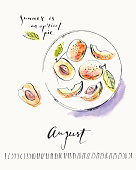 August calendar with ink calligraphy elements and apricot fruits on a plate top view. Summer ink and watercolor stain illustration.
