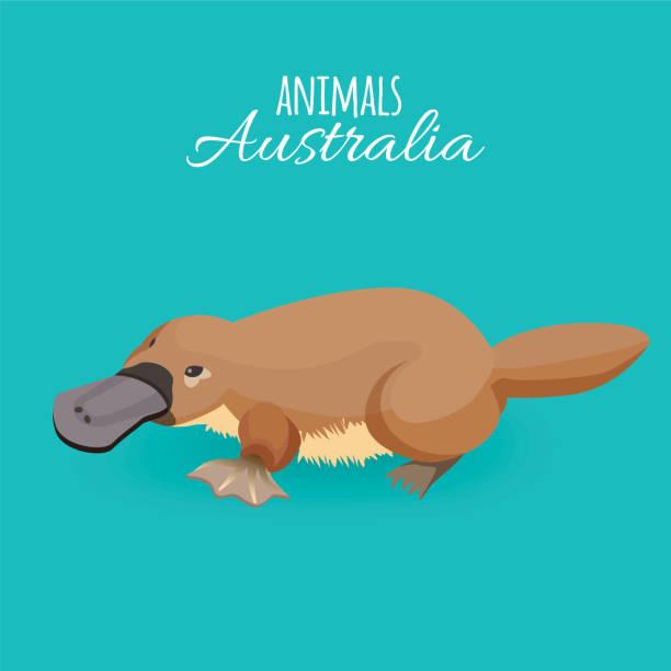 bildbanksillustrationer, clip art samt tecknat material och ikoner med australien djur brun krypande duckbilled platypus isolerade på azure bakgrund - platypus