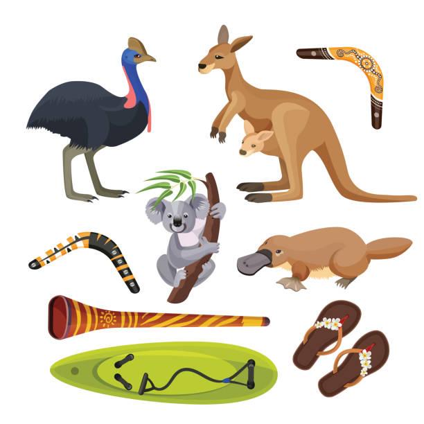 bildbanksillustrationer, clip art samt tecknat material och ikoner med australien symboler isolerade. koala, känguru, surfbräda, boomerang, struts, platypus, didgeridoo - platypus