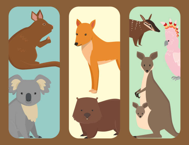 Australia wild animals brochure cartoon popular nature characters flat style mammal collection vector illustration vector art illustration