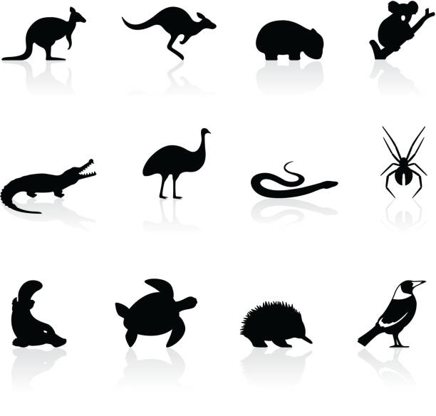 australian animal icons - koala stock illustrations