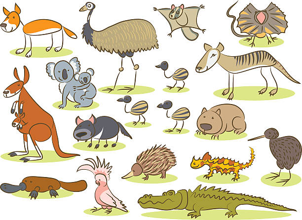 Australian animal kids drawing Illustration of a group of animals of Australia painted by hand as a simple child's drawing. bristle animal part stock illustrations