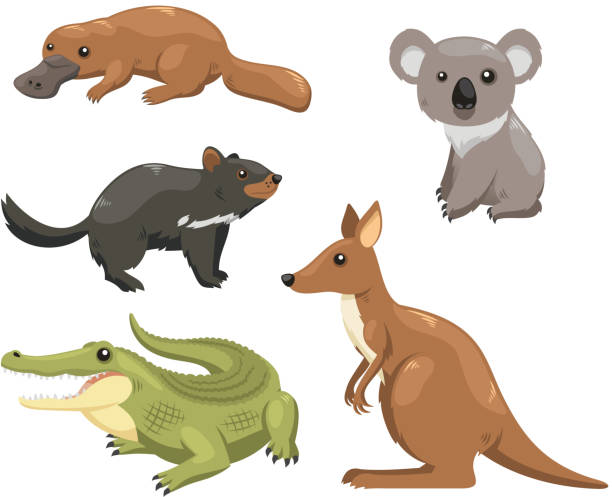 australian animals 1 - koala stock illustrations