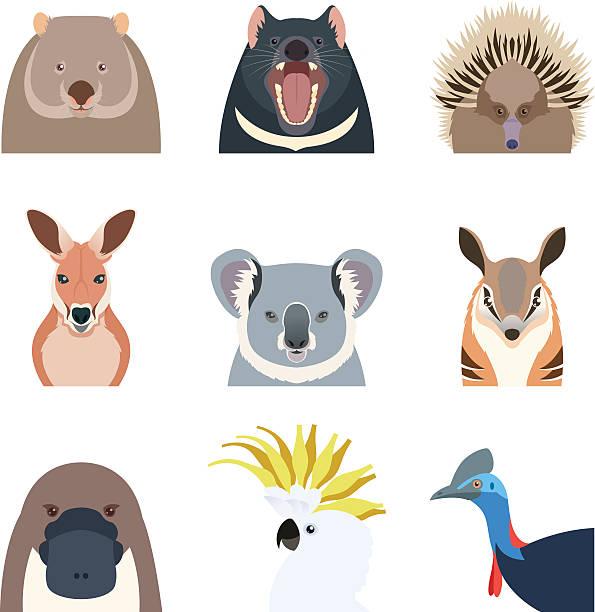 bildbanksillustrationer, clip art samt tecknat material och ikoner med australian animals flat icons - platypus