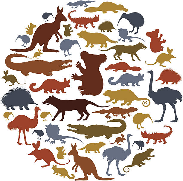 Australian Animals Icon Collage High Resolution JPG,CS5 AI and Illustrator EPS 8 included. Each element is named,grouped and layered separately. Very easy to edit. australian culture stock illustrations