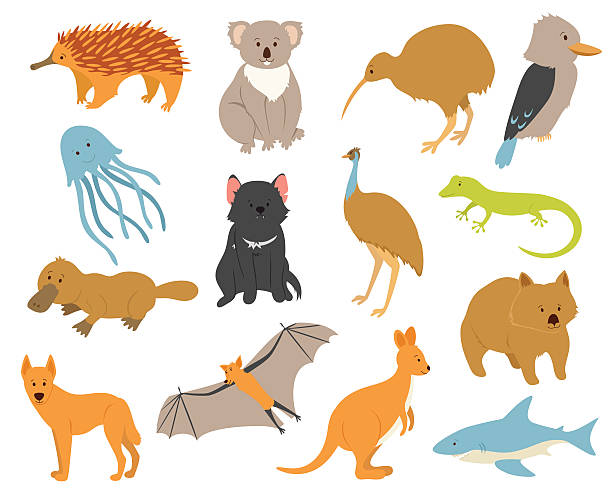 australische tiere satz - megabat stock-grafiken, -clipart, -cartoons und -symbole