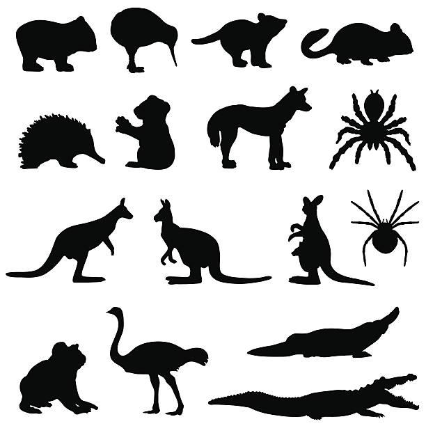 Australian animals silhouette set Australian animals in silhouette including a wombat, kiwi, tasmanian devil, possum,echidna,koala bear, dingo, spider, tarantula, kangaroo. kangaroo stock illustrations