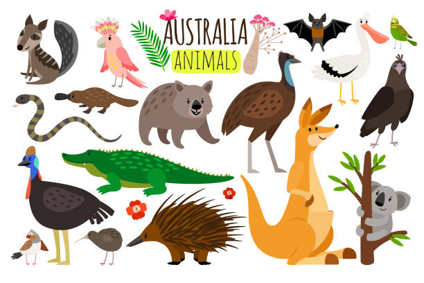 Australian animals. Vector animal icons of Australia, kangaroo and koala, wombat and ostrich emu vector art illustration