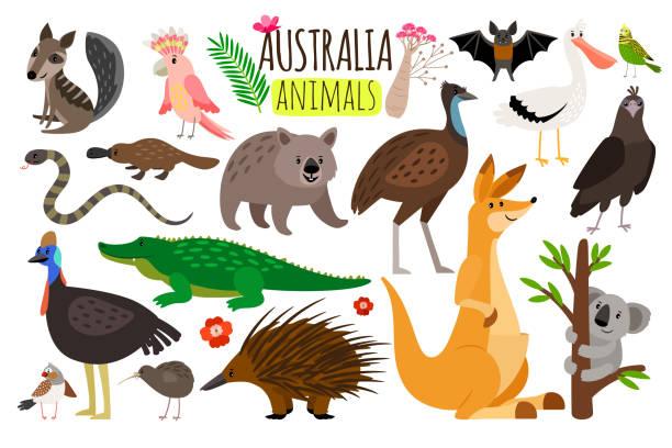 bildbanksillustrationer, clip art samt tecknat material och ikoner med australiska djur. vector djur ikoner av australien, känguru och koala, vombater och struts emu - australia