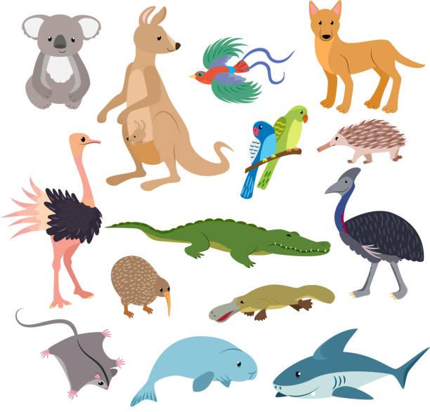 Australian animals vector animalistic character in wildlife Aust vector art illustration
