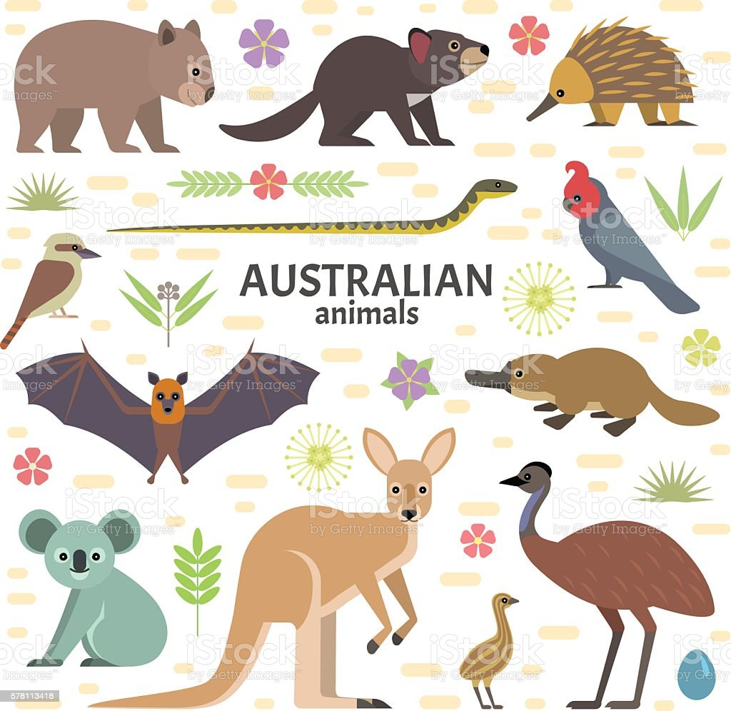 Australian animals vector art illustration
