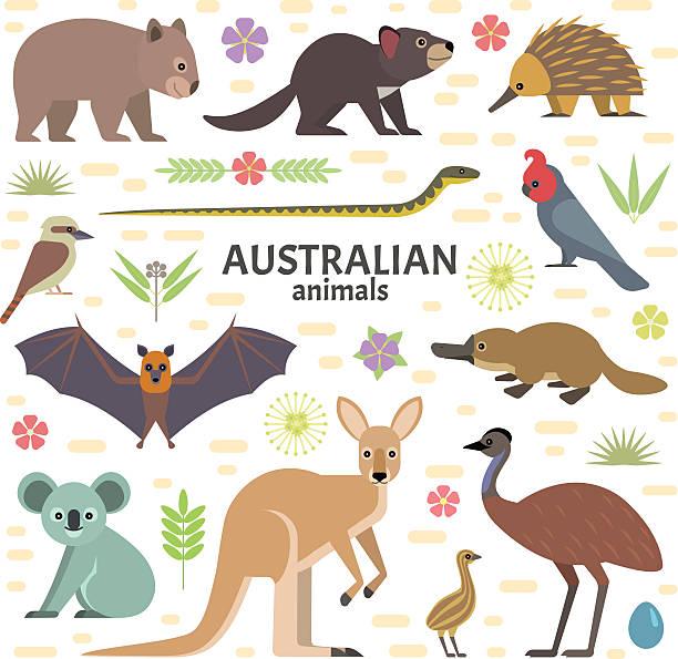 bildbanksillustrationer, clip art samt tecknat material och ikoner med australian animals - platypus