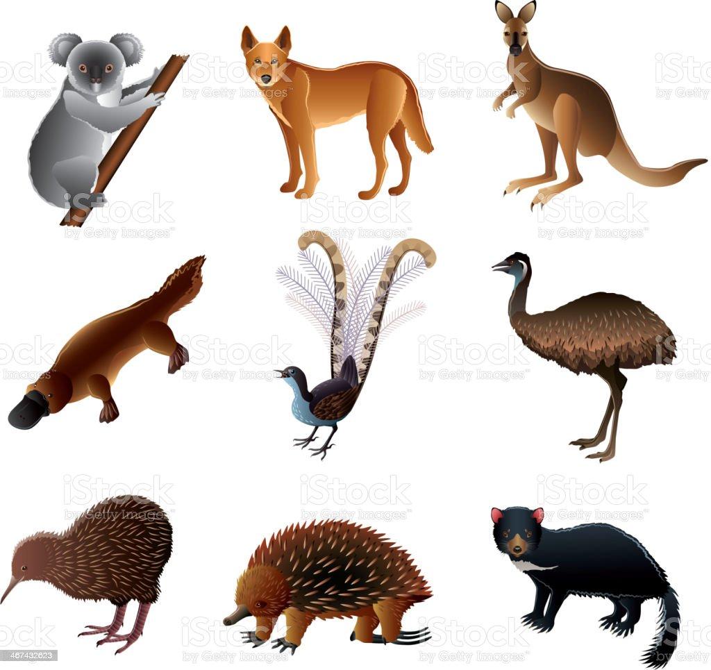 Australian animals vector set vector art illustration