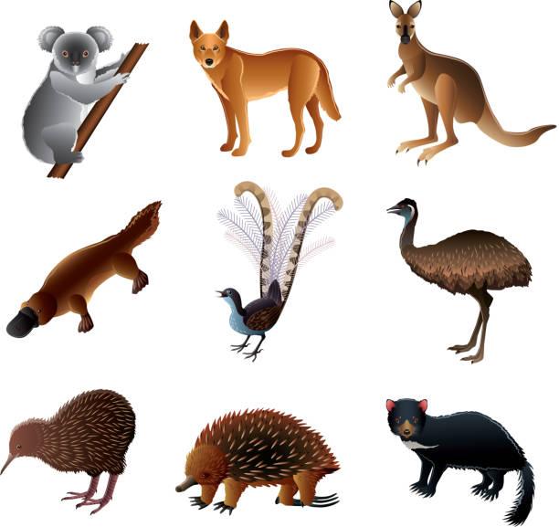 bildbanksillustrationer, clip art samt tecknat material och ikoner med australian animals vector set - platypus