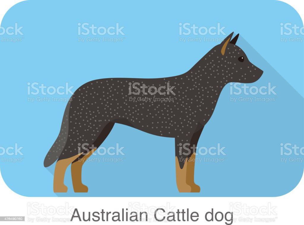 Australian Cattle Dog, dog standing flat icon design vector art illustration