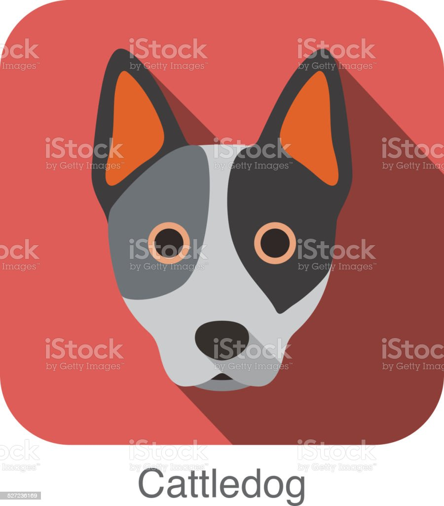 Australian cattle dog face flat icon, dog series vector art illustration