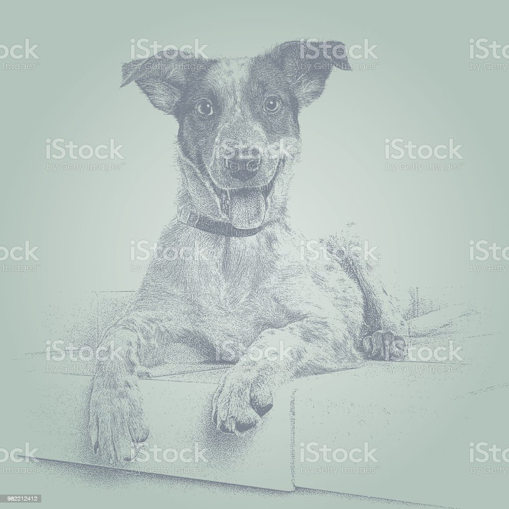 Australian Cattle Dog hoping to be adopted vector art illustration