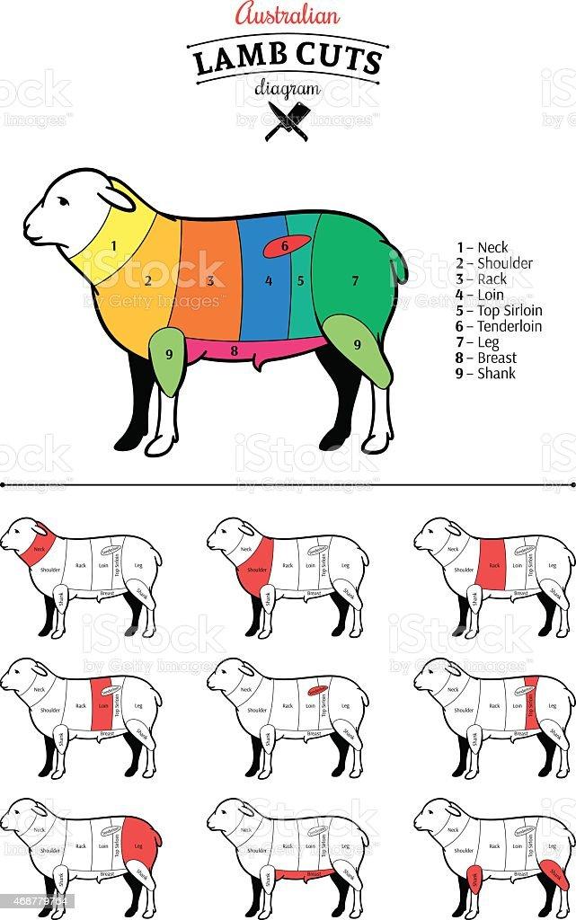Animal Breast Butchers Shop Food Meat Australian Lamb Cuts Diagram