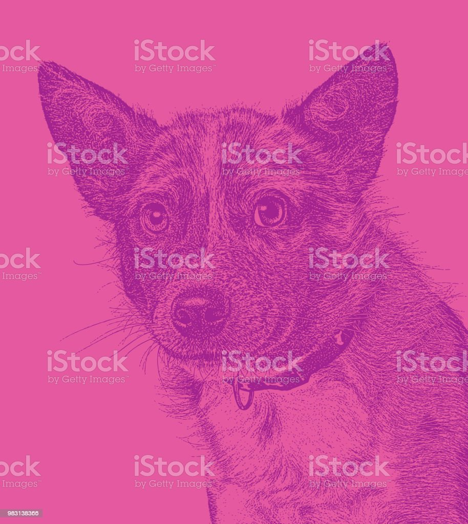 Australian Shepherd Dog hoping to be adopted vector art illustration