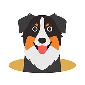Australian Shepherd dog on the hole,watching, vector illustration