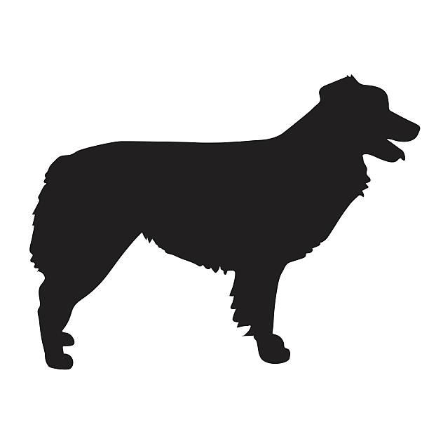 Australian Shepherd Illustrations, Royalty-Free Vector ... (612 x 612 Pixel)