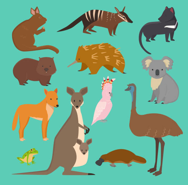 Australian wild vector animals cartoon collection australia popular animals like platypus, koala, kangaroo, ostrich set isolated on background vector art illustration
