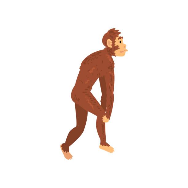 Australopithecus, biología evolución humana etapa, proceso evolutivo de la mujer vector ilustración - ilustración de arte vectorial