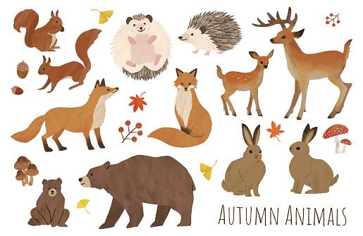 autumn animal set illustration water paint