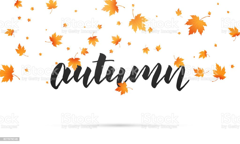 autumn background autumn lettering and falling maple leaves template