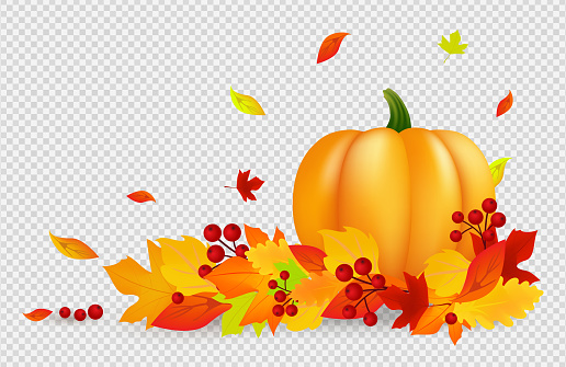 Autumn background. Thanksgiving vector banner with pumpkin gold red leaves isolated on transparent backdrop. Falling fall leaves, harvest design