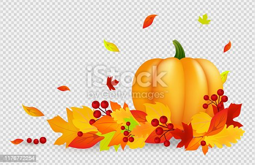 Autumn background. Thanksgiving vector banner with pumpkin gold red leaves isolated on transparent backdrop. Falling fall leaves, harvest design. Illustration autumn thanksgiving, pumpkin and leaf