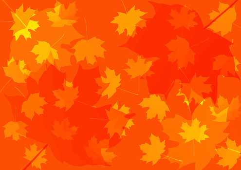 autumn background with maple leaves. vector illustration. thanksgiving background.  back to school. teachers' day. grandparents day