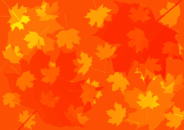 autumn background with maple leaves. vector illustration. thanksgiving background.  back to school. teachers' day. grandparents day autumn background with maple leaves. vector illustration. back to school. teachers' day. thanksgiving background. grandparents day fall background stock illustrations