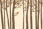 A bird perches among fall birch trees.