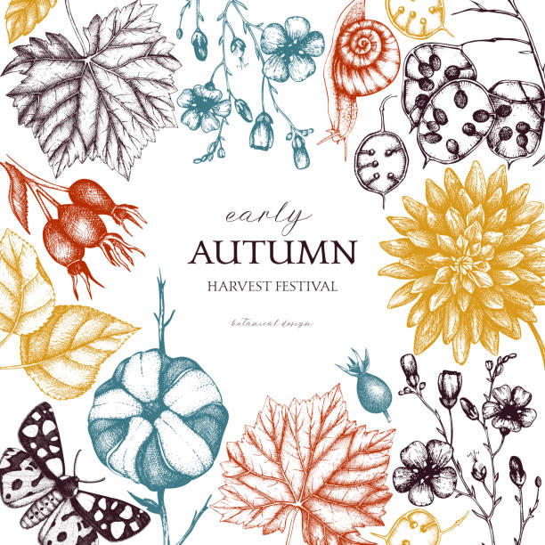 Autumn card design Vector design with hand drawn leaves, flowers, snails, butterflies, and seeds sketches. Autumn nature background. Vintage farm life illustration. harvesting stock illustrations